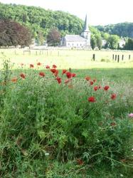 De nouveaux prés fleuris semés par le Plan Communal de Développement de la Nature