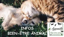 Identification chiens et chats