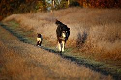 identification chiens chat IP